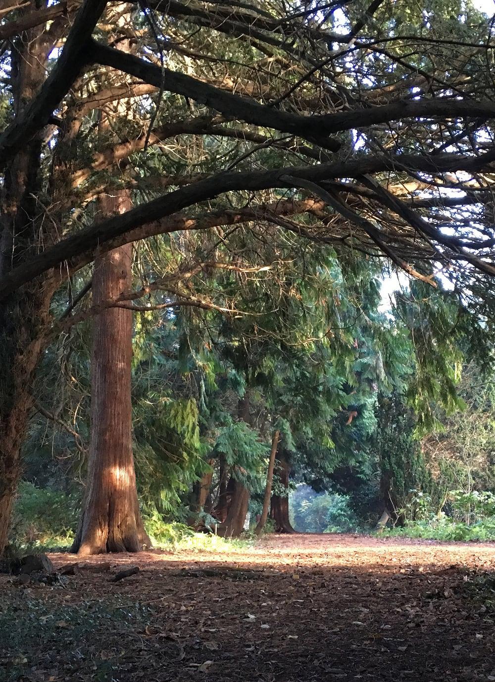 Forstbotanisk have