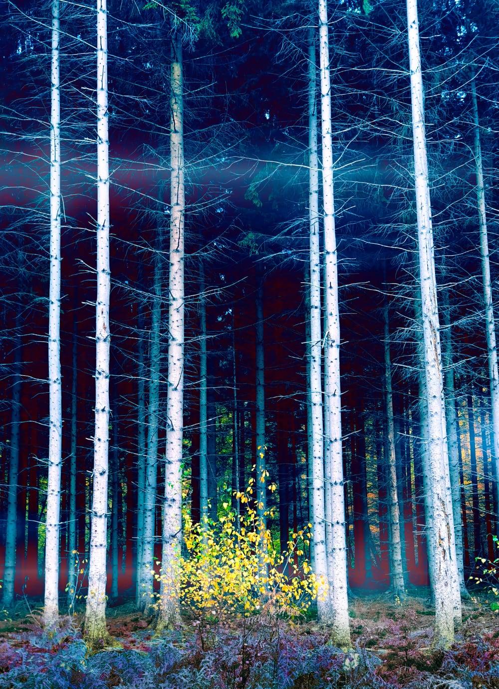 Rude skov.main_b
